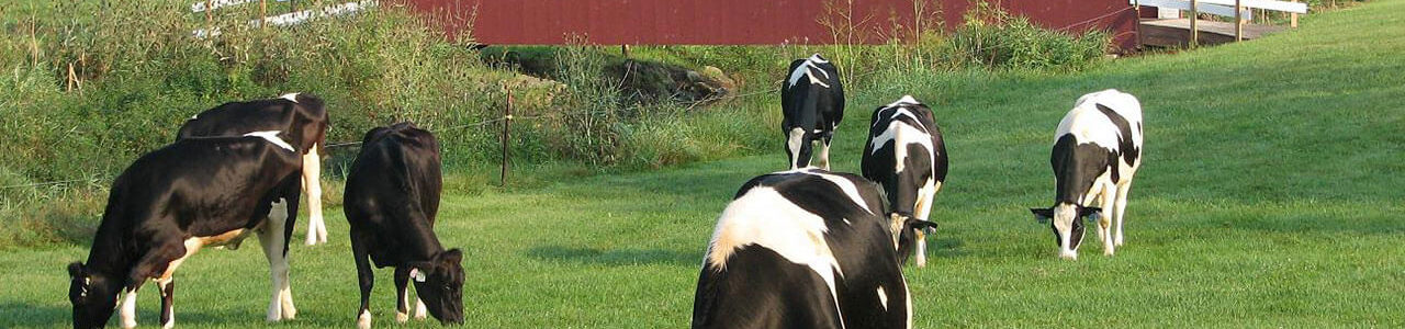 Oregon Dairy Covered Bridge