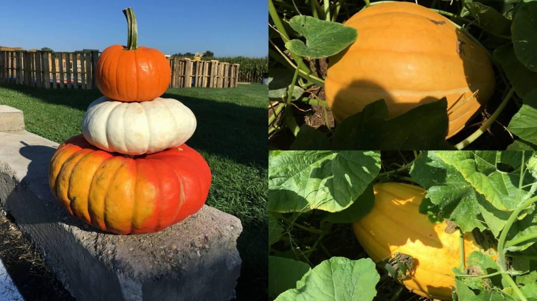 Pumpkin Event