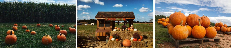 Pumpkin Pickin Header